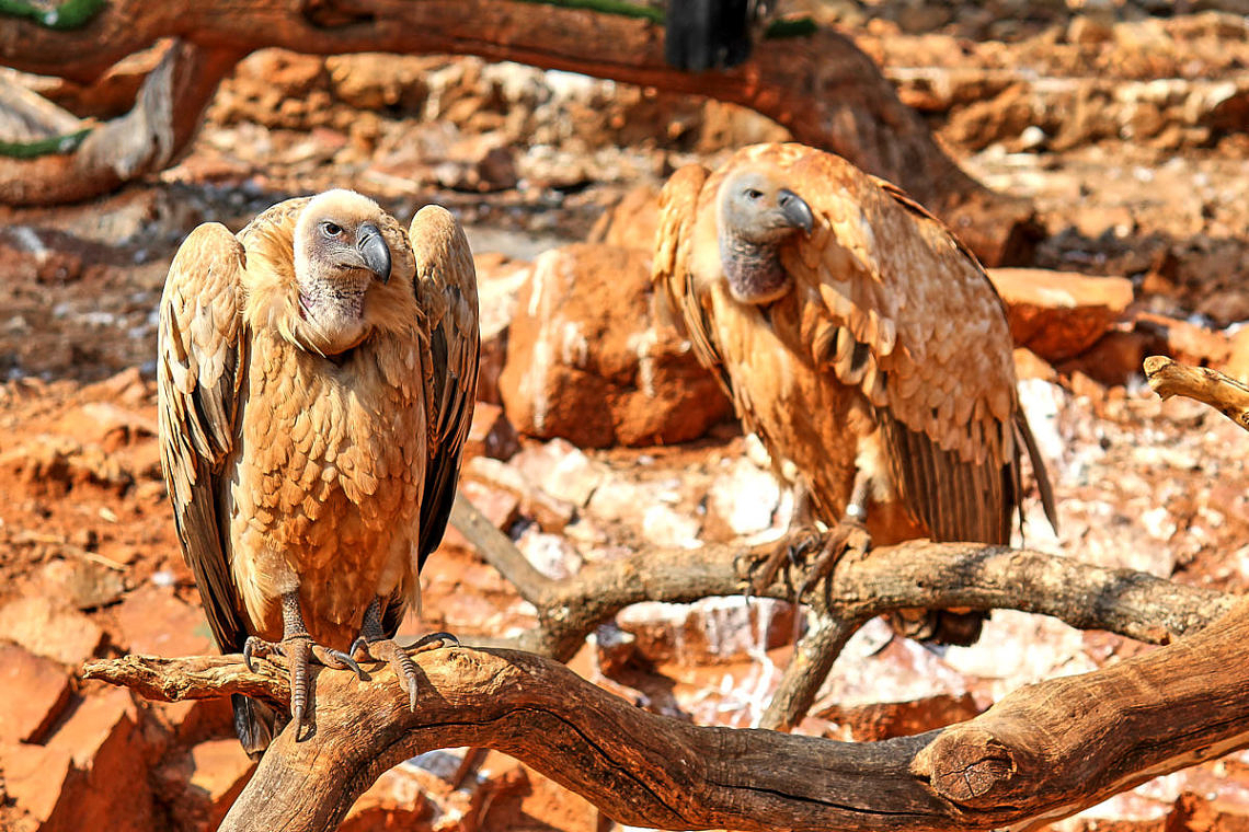 Foto: Vögel