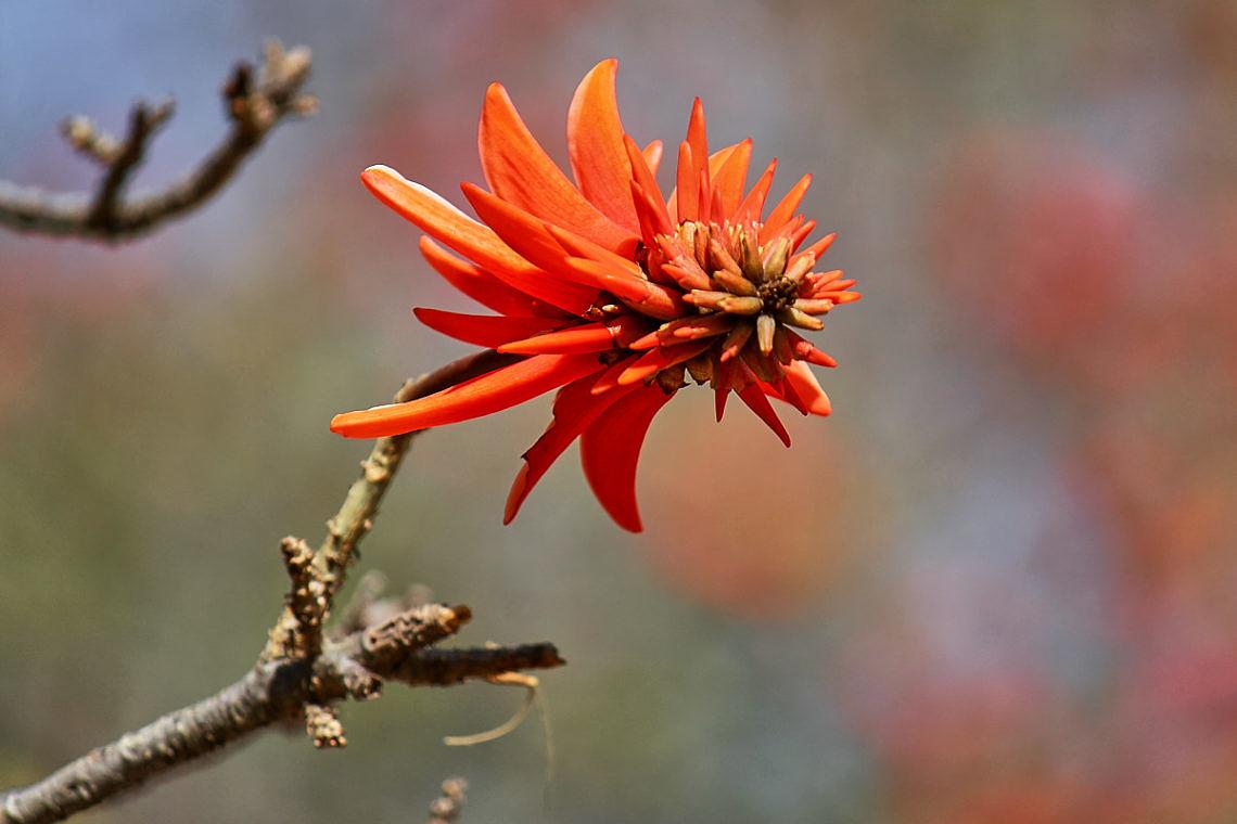 Foto: Blume