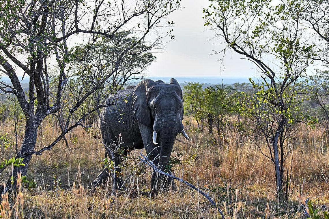 Foto: Elefant