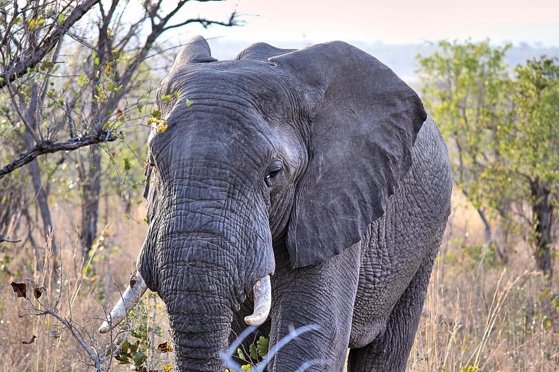 Foto: Elefant im Morgendliche
